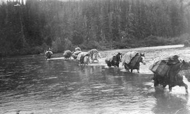 Crossing the Stikine River on the way to Little Klappan River, 1913.