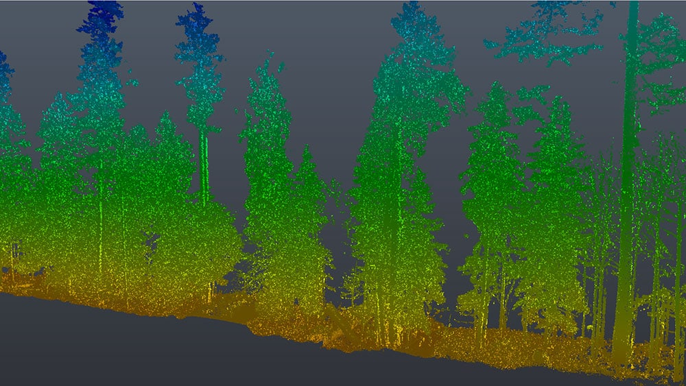 3D laser scan forest cross section point cloud